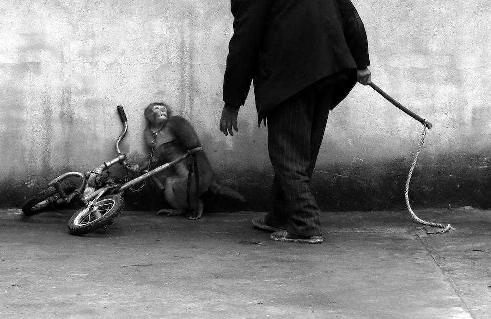 Natura, 1° premio Yonghi Chju, Cina Sunzhou, provincia di Anhui, Cina Una scimmia da circo con il suo addestratore. Con più di 300 compagnie, Suzhou è conosciuta come città del circo cinese per eccellenza.