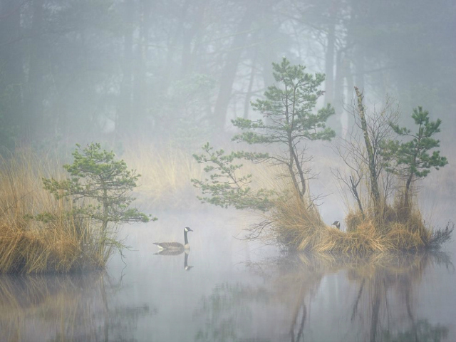 foto di Andrew George