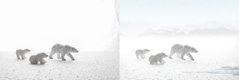 la-foto-sognata-set-fotografico-orsi-polari