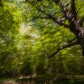 ICM-bosco-astratto