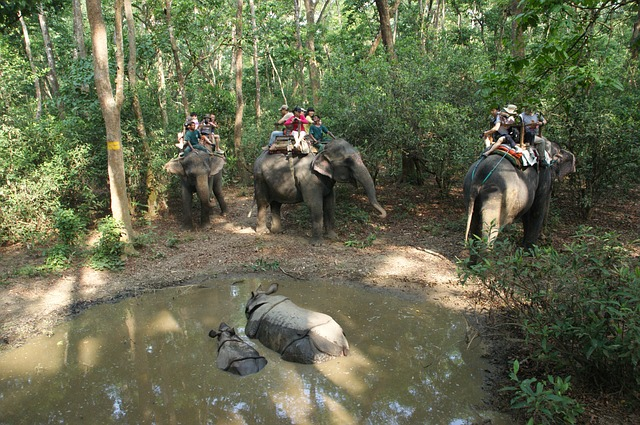 turismo abuso animali